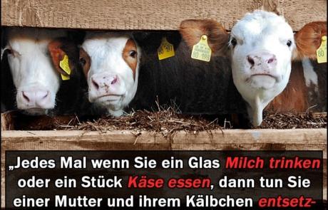 Aussagen einer ehemaligen Landwirtin über Milchwirtschaft, Milchkuh, vegan, Fakten, Kälber