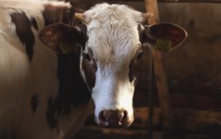 5 unbestreitbare Fakten über den Fleischkonsum