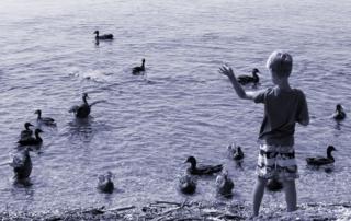 Hört endlich damit auf, die Enten zu füttern!
