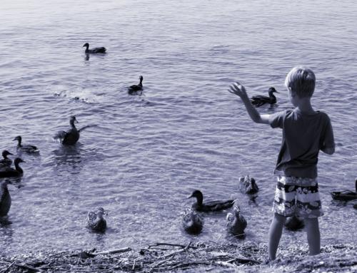 Hört endlich damit auf, Enten mit altem Brot und Brötchen zu füttern!