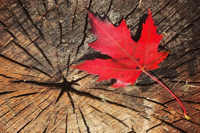Kanada revolutioniert Ernährungspyramide - mehr pflanzliche und weniger tierische Lebensmittel