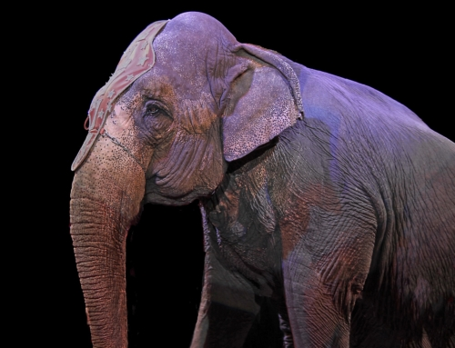 Dänemark beschließt Wildtierverbot im Zirkus