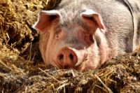 Mit kleinen Schritten gegen Tierleid vorgehen - Natural Energizer