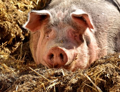 Jeder kann gegen Tierleid vorgehen – Natural Energizer