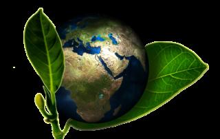 So gestaltest auch Du deinen Alltag ein wenig veganer - Natural Energizer