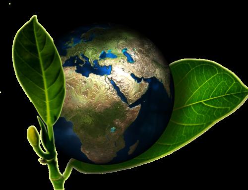 So gestaltest auch Du deinen Alltag ein wenig veganer – Natural Energizer