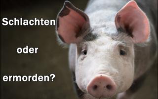 Tiere werden nicht geschlachtet, Tiere werden ermordet - absurde Wortspielerei!