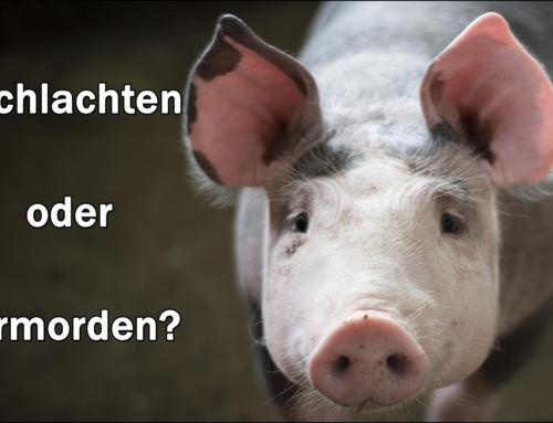 Tiere werden nicht geschlachtet, Tiere werden ermordet – absurde Wortspielerei!