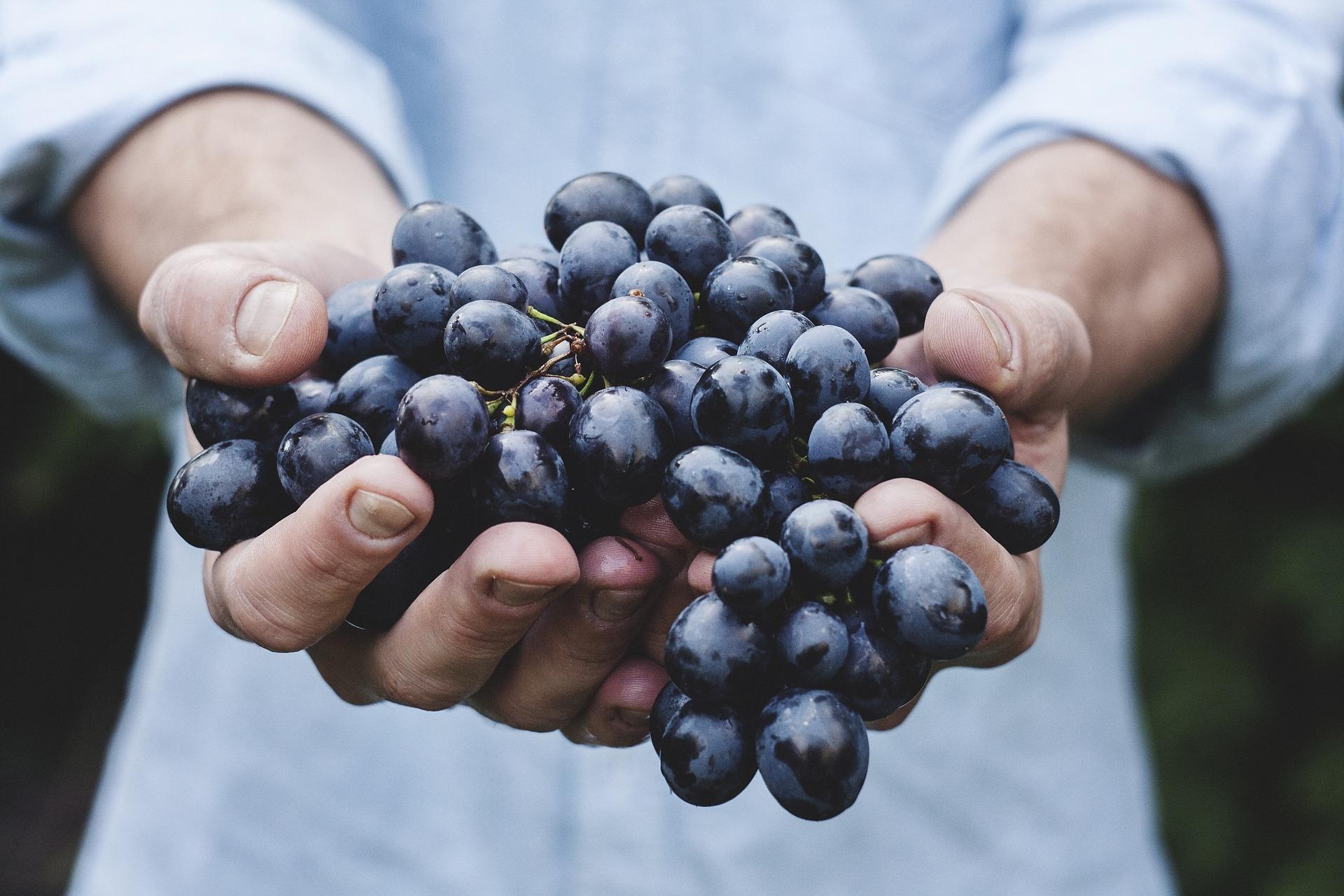 Kurz & knapp: Darum ist eine pflanzliche Ernährung die Gesündeste